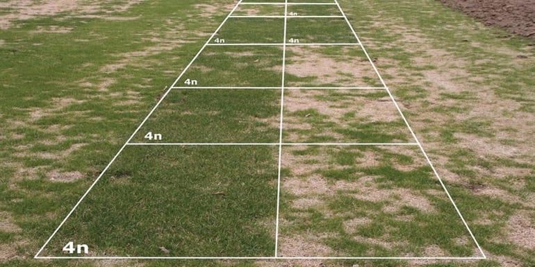 dosiewanie trawy