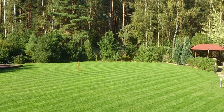 Nowy trawnik