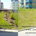 program-pielegnacji-trawnika-6