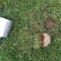 zabiegi-pielegnacji-boisk-trawiastych-5
