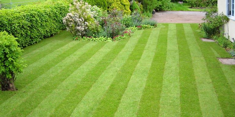zregenerowany trawnik